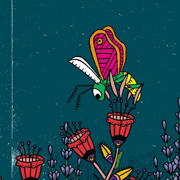 Detall il·lustració La Lluerna Morada