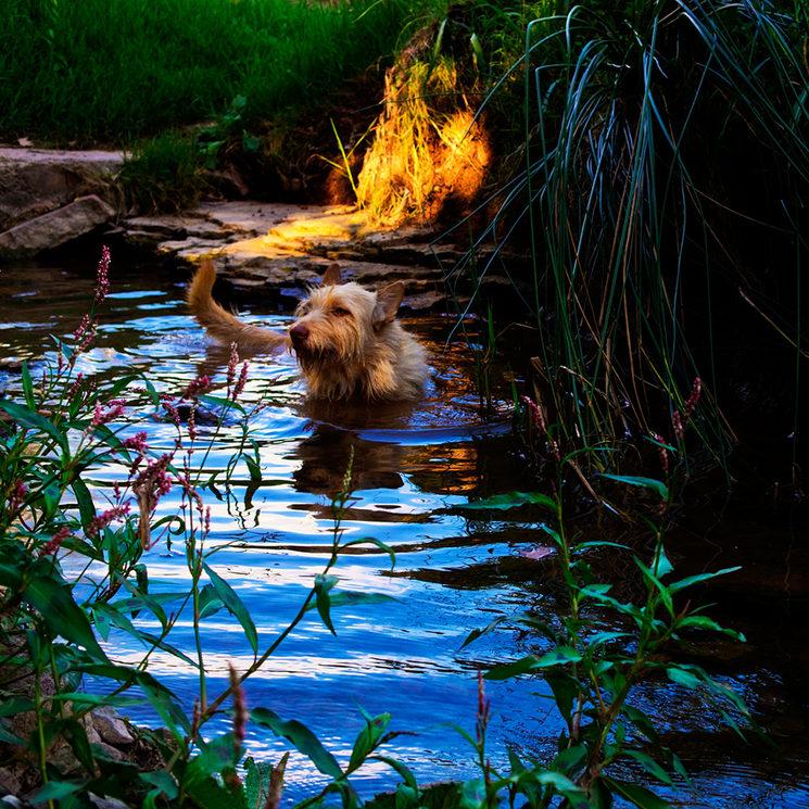 Capvespre al riu