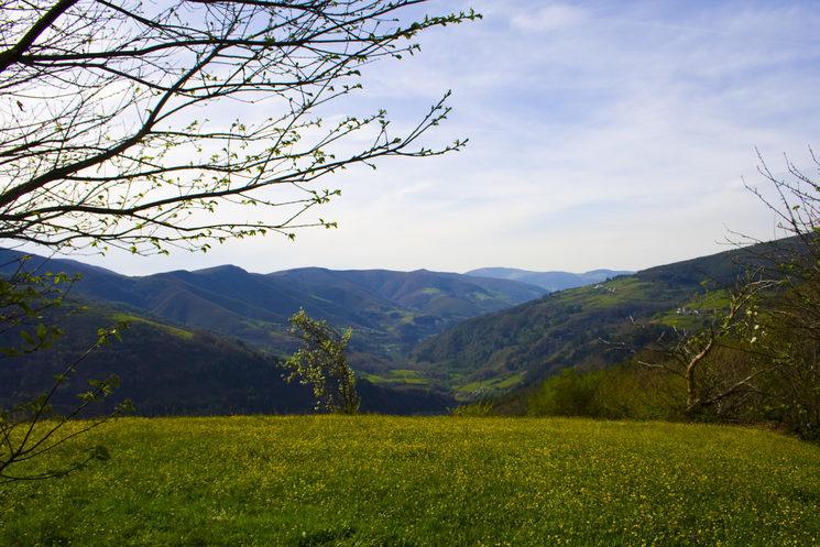 El monte verde de Ibias