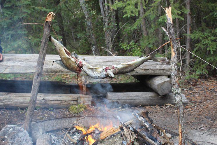 Pesca del dia (Arctic Grayling)
