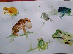 Frogs, extra illustration