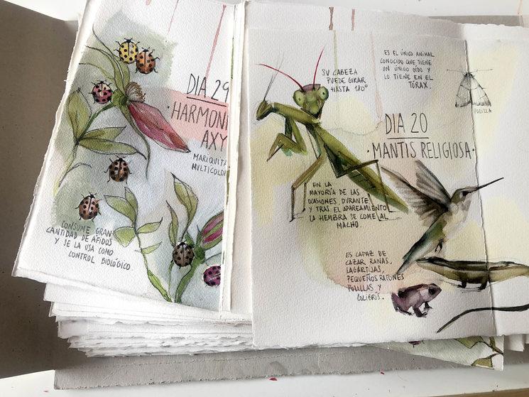 Partes interiores del libro