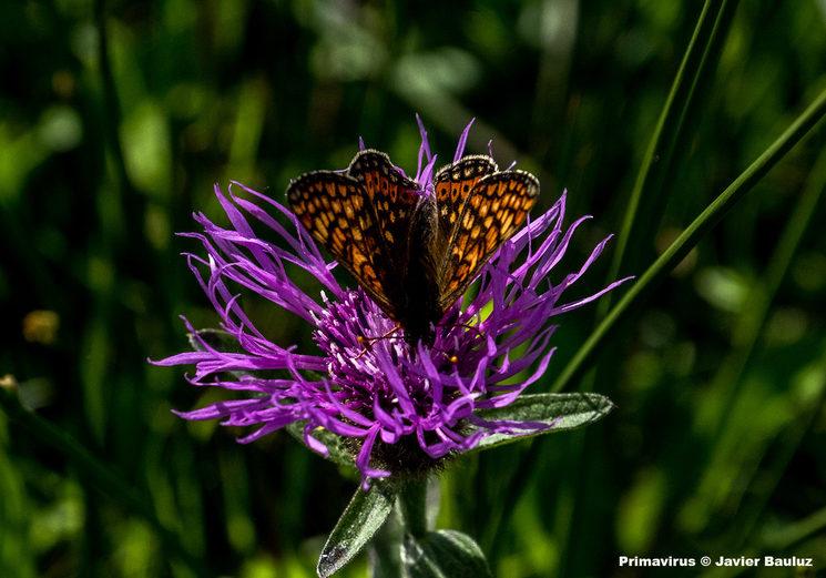 """Mariposa en flor. """"Primavirus"""" © Javier Bauluz"""