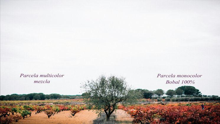 PARCELA MEZCLA vs PARCELA BOBAL