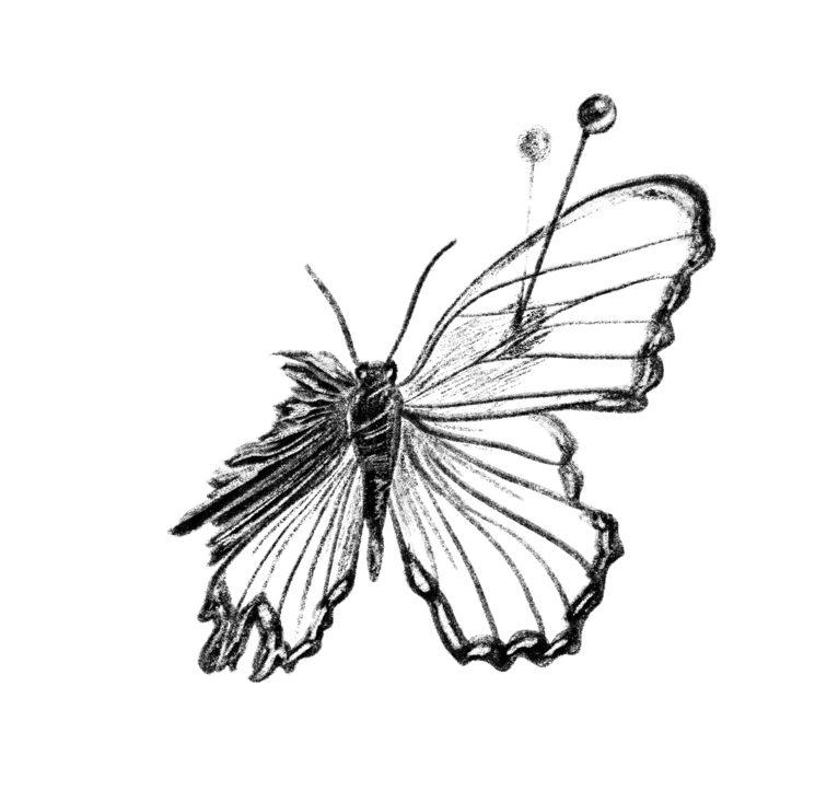 Mariposa en alfileres