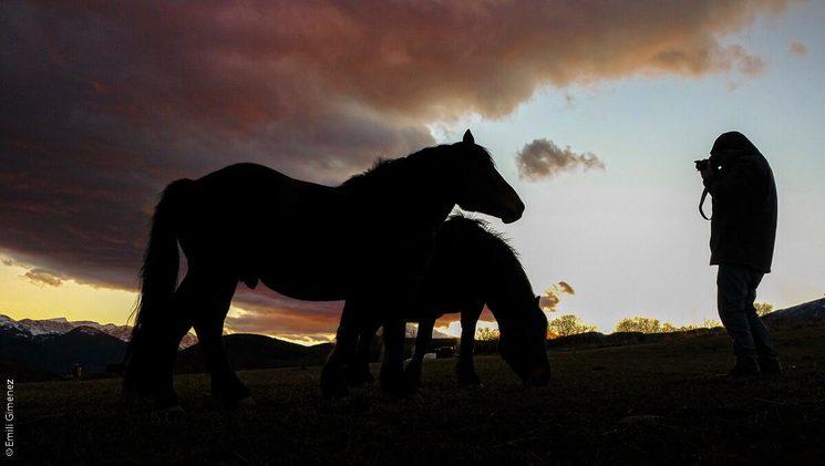 He dedicado buena parte del tiempo libre de los últimos años a fotografiar caballos - Foto de Emili Gimenez (DEP)