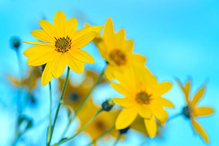 Unes flors grogues per alegrar la vista!