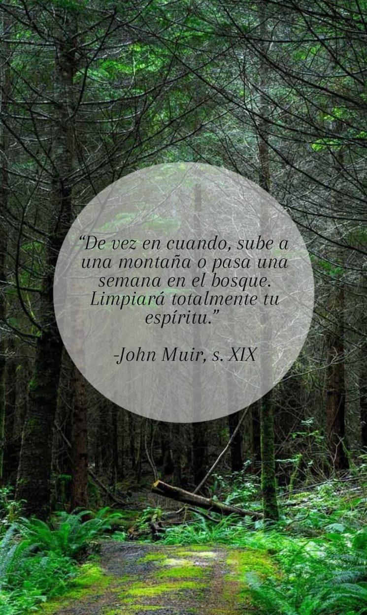 En el bosque con John Muir