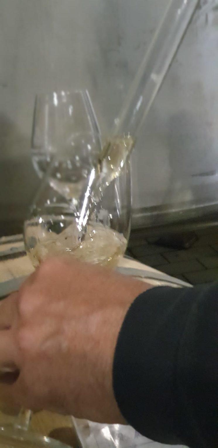 Traient mostres del vi