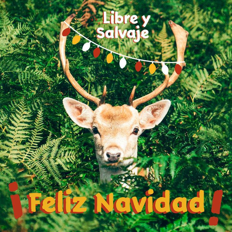 ¡Feliz Navidad!  ✨✨