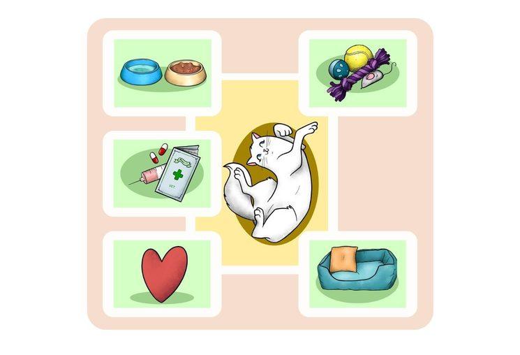 Exemple de gat amb totes les necessitats cobertes.