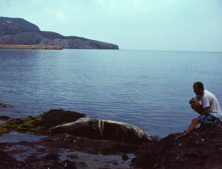 Peluso descansa indiferente ante el biólogo Xisco Avellá. Se observa la cicatriz que le dejó el aro de pesca (Chafarinas, 1991).