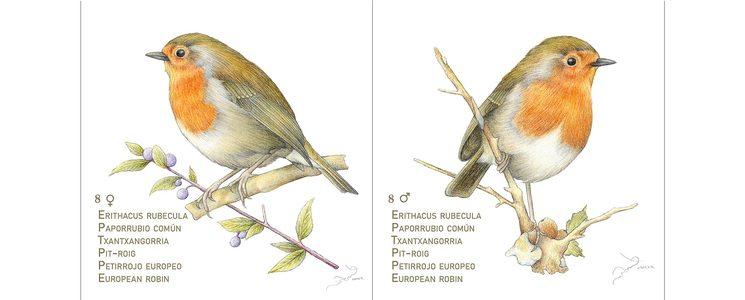 Pareja de petirrojos de Pájaros I. Las cartas miden 8,5 cm de lado