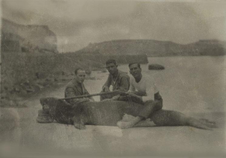 regocijo tras dar muerte a un gran macho de foca monje