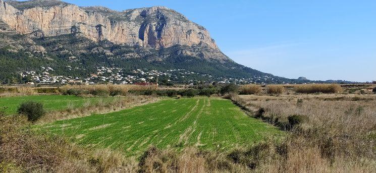 Camps de blat amb el Montgó al fons