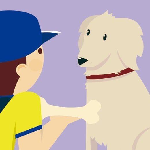 Stampy nombre escogido por los Mecenas para el Perro de Carteros. 14 horas fin de campaña