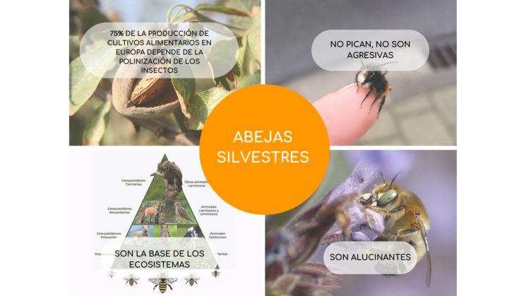 Conoce a las abejas silvestres
