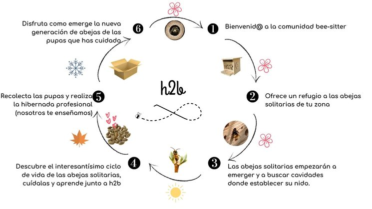 Experiencia bee-sitter