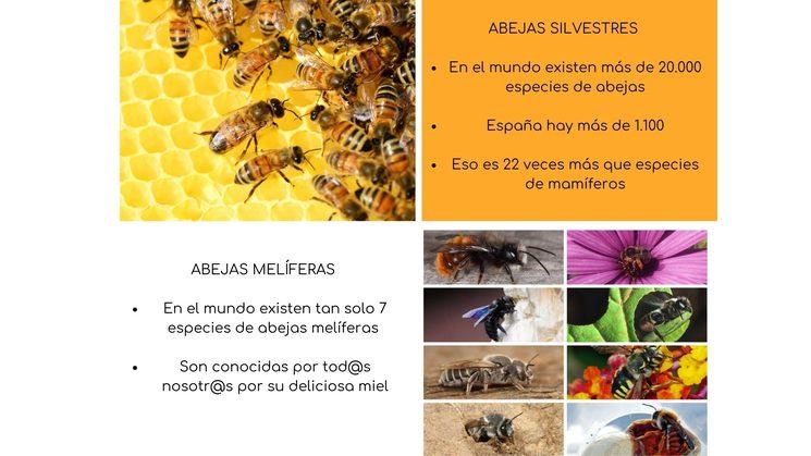 Diversidad de abejas