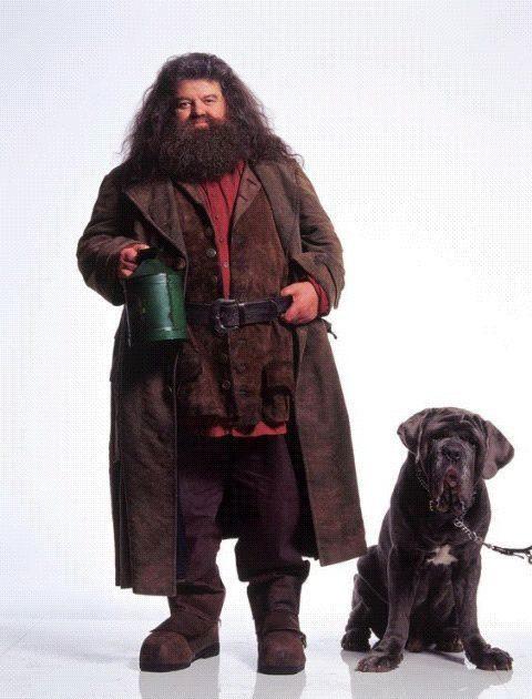 Fang, perro de Hagrid en la saga de Harry Potter.