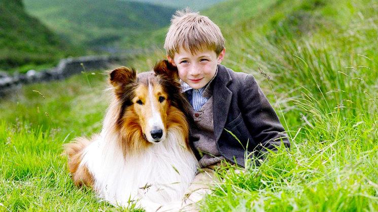 Pocos perros tienen la fama de Lassie.