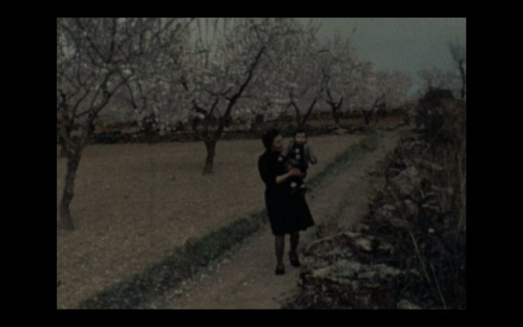Ametlers florits a Albocàsser. Arxiu Bernardo Segarra